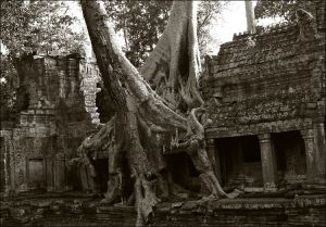 Two-Trees-at-Ta-Prohm---duo.jpg