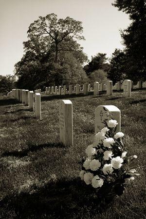 Roses-in-Arlington---Apr.10.jpg